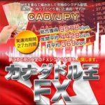 カナダドル王FX配信 【検証とレビュー】